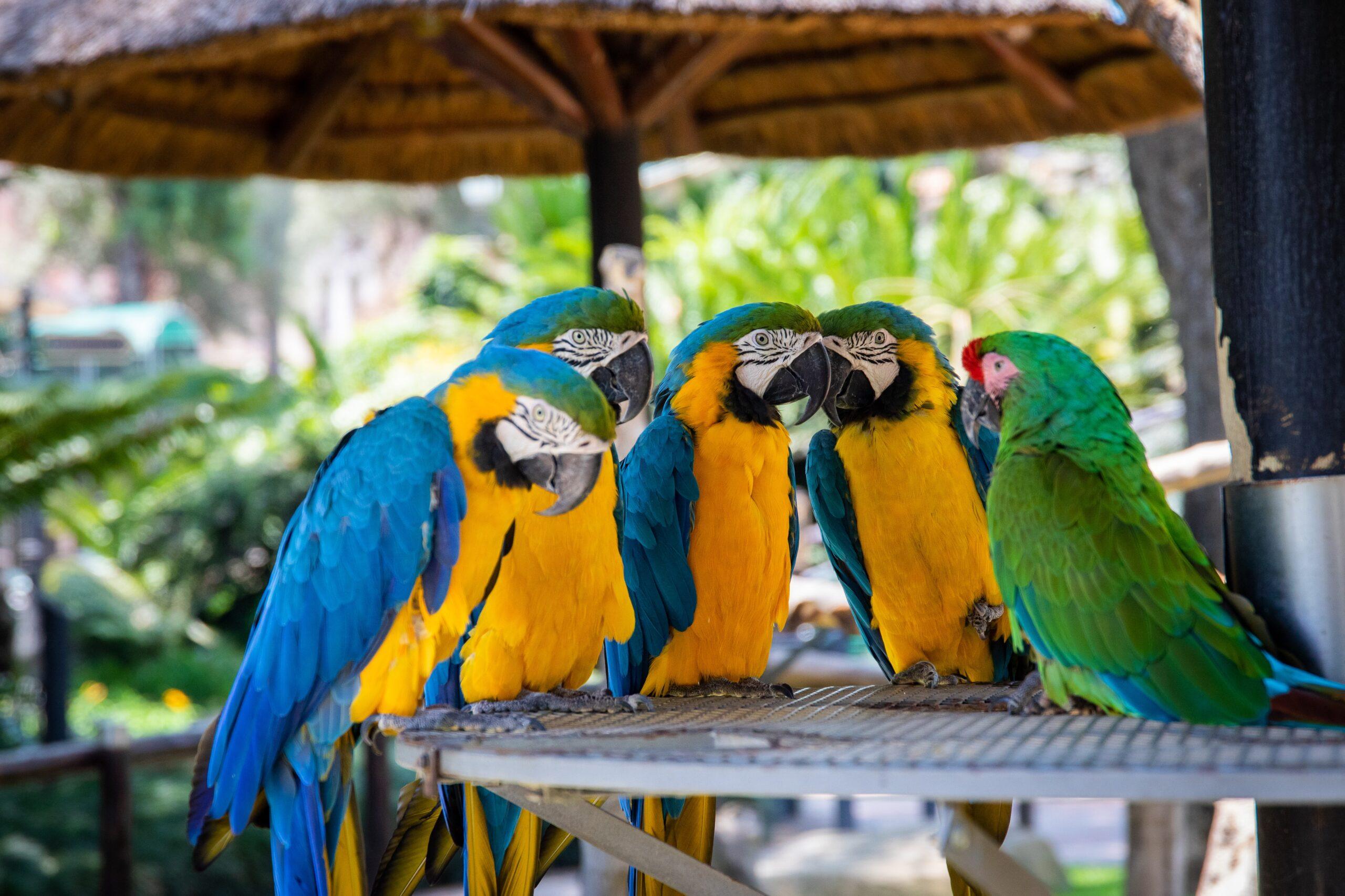 Foto di pappagalli