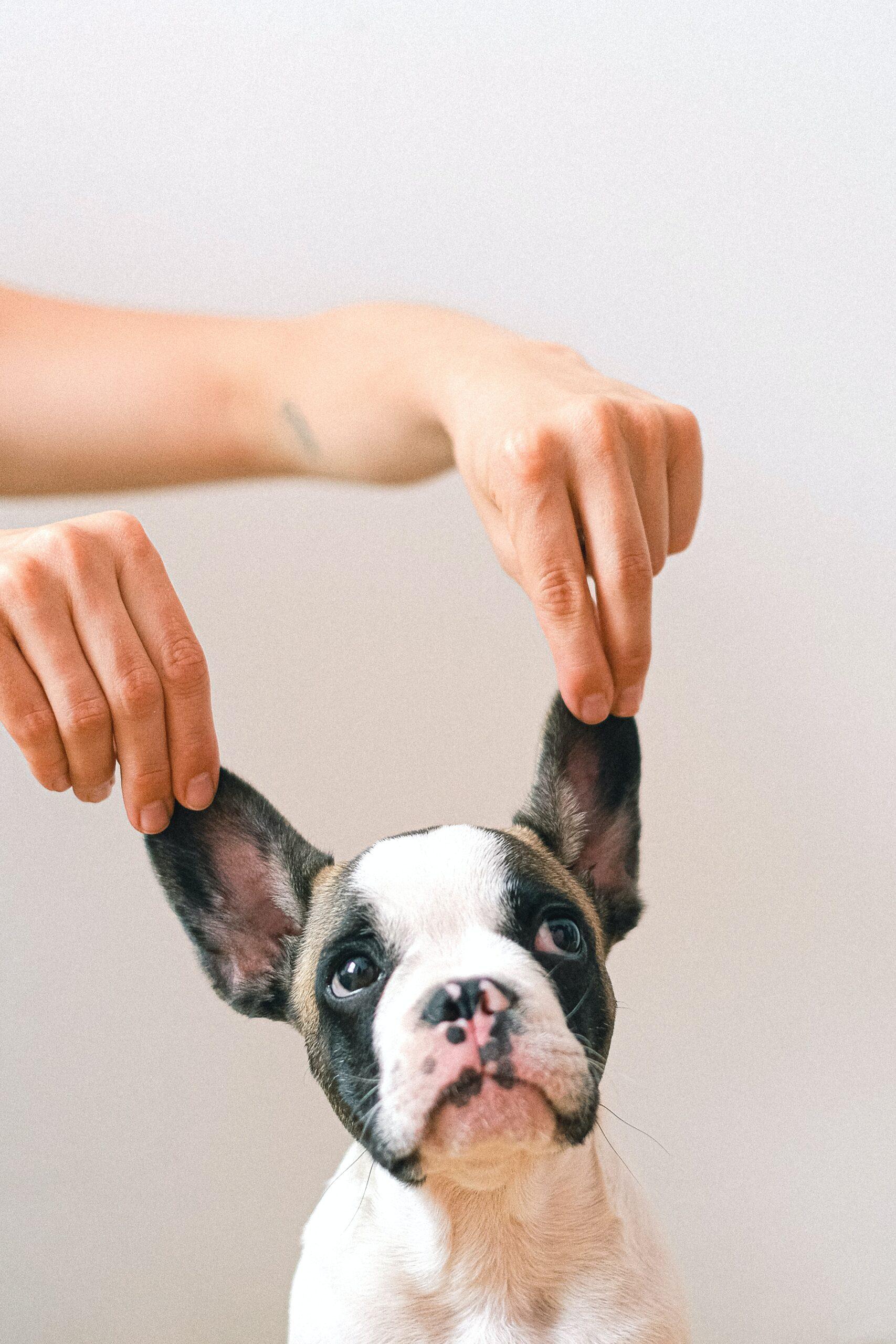 Foto di cane